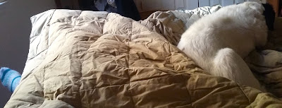 Minnie, The Queen, is a bed hog and cover thief.
