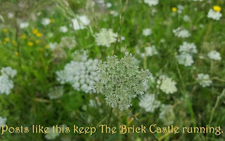 Countryside photo of very fine cow parsley flowers blowing amid grass