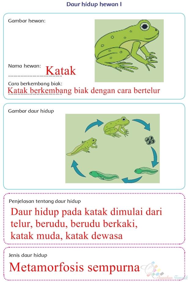 Kunci Jawaban Buku Siswa Kelas 4 Tema 6 Halaman 63, 64, 65 ...