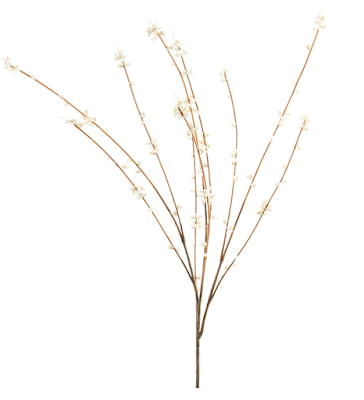 small white blooms on brown stems