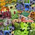 2020-as év színtrendjei & a virágoskertek kedvencei