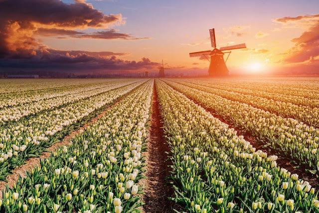 هولندا تعلن أنها ستغير اسمها في المحافل الرسمية والدولية والسبب ..