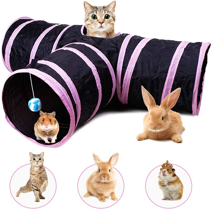 cat play tunnels