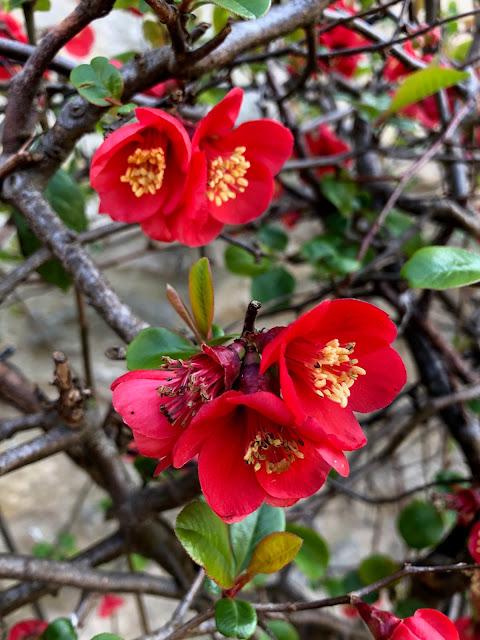 Chez Maximka, spring blossom