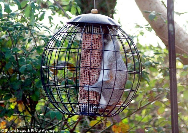 Dailypetfwd Better Luck Next Time Bird Lovers Mission