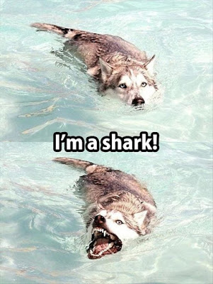 Dog Humor : It's a Shark not a dog