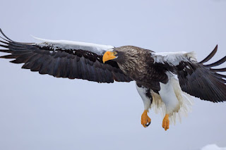Exotic eagle on the loose in Pittsburgh after aviary escape
