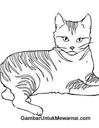 Mewarnai Gambar Kucing Hitam Putih