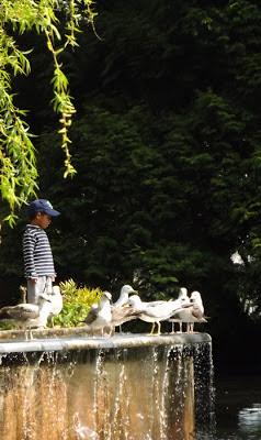 menino olhando gaivotas num lago