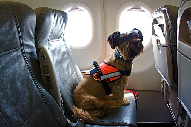 7 famous airlines allow you to travel everywhere with pets