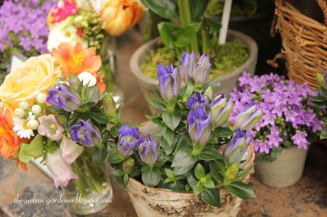 Flowering plants for indoor spaces