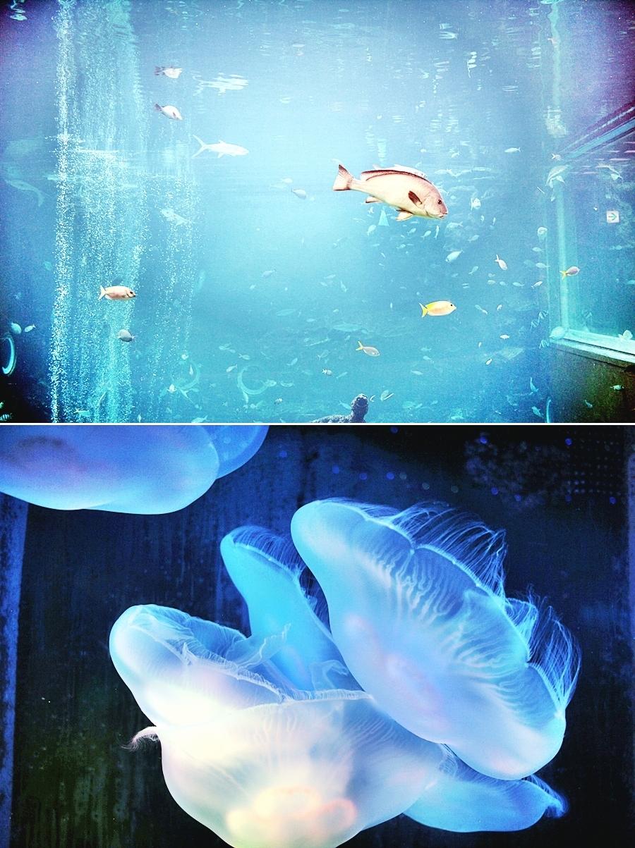qualle fisch aquarium