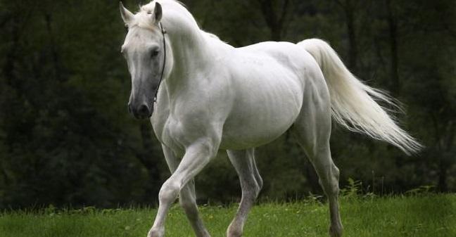 Ο γέροντας και το άσπρο άλογο...