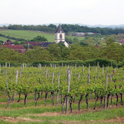 View of Branceilles through the vineyards.