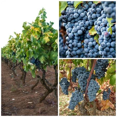 vino primitivo puglia