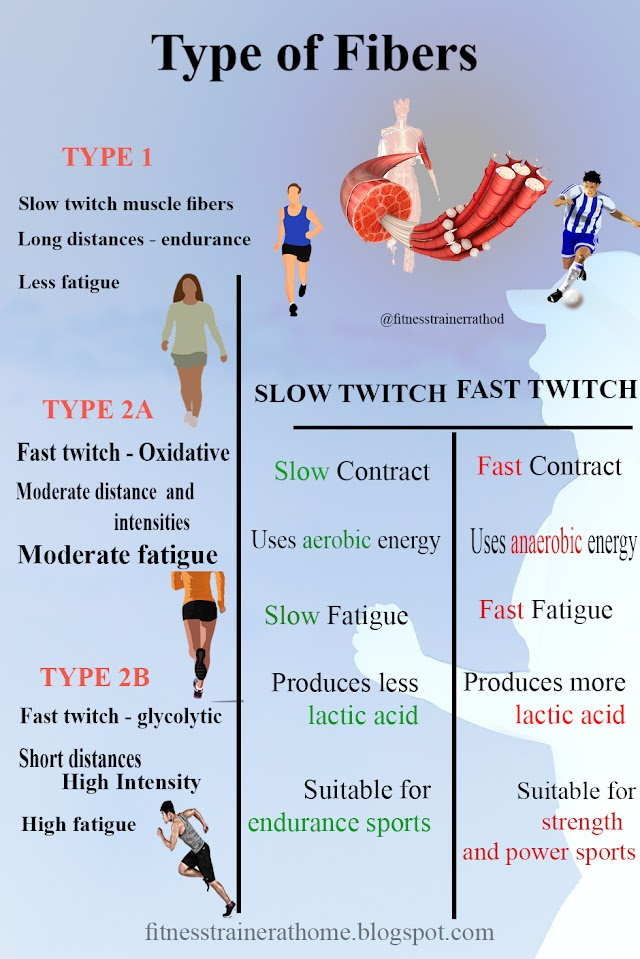 Types of Muscle Fibers Chart