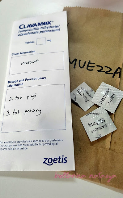 Antibiotik Untuk Kucing Pyometra