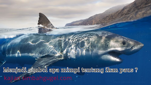 mimpi tentang ikan paus