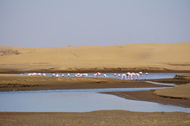 Lagoa dos Flamingos Bird Sanctuary em Walvis Bay