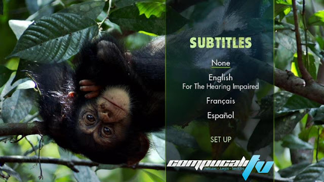 Chimpancés DVDR NTSC Español Latino Descargar 2012 Documental