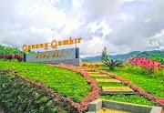 Perkebunan Teh Gunung Gambir (Green Tea Plantations)