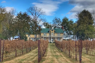 Autumn Afternoon at a Winery