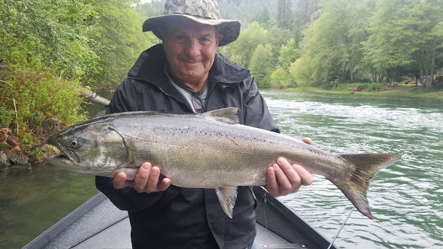 Rogue River, Umpqua River, Chetco River, Coquille River, Pacific, Oregon, Oregon Coast, Salmon Fishing, Gold Beach OR, Phil Tripp, Rogue River Sport Fishing, Roseburg OR, Fly fishing, travel oregon, Guide service, SW Oregon, Fishing charter, drift boat, Elk River, Sixes River, Steelhead, Springers, Chinook Salmon, King Salmon, Willie Boats, Medford OR, Rogue Bay, Coos Bay, Shady Cove OR, Back-bouncing, trolling, side-drifting, Oregon Vacation, Charter, Maxima, Mercury, G-loomis, Shimano, Simms, Sawyer,