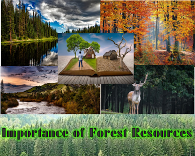 Class 7/8/10 - Forests Our Life Line or Natural Resources - Importance of Forest Resources (#cbsenotes)(#eduvictors)