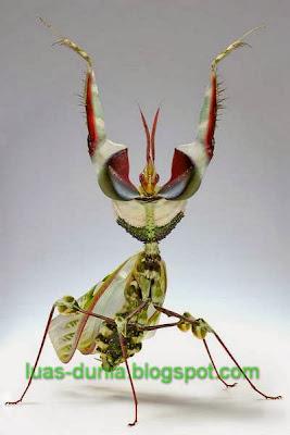serangga paling besar