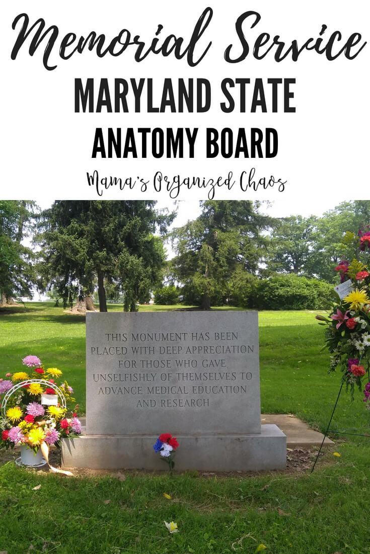 Maryland State Anatomy Board Choice Image Human Anatomy Organs Diagram