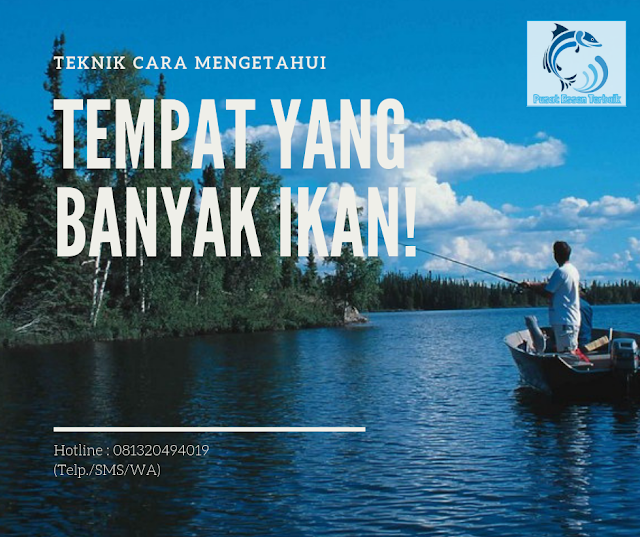 https://pusatessenterbaik.blogspot.com/2019/06/teknik-jitu-mengetahui-tempat-yang-banyak-ikan-di-sungai.html