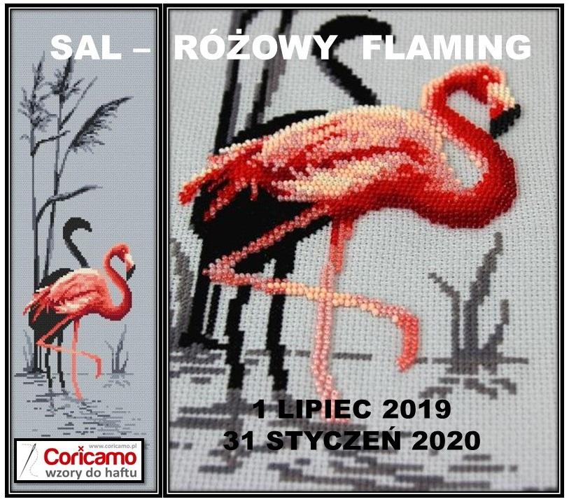 Sal z Flamingiem