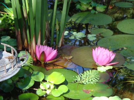 43 Stunning Garden Pond Waterfall Design Ideas # ... |Gentle Waterfall Pond