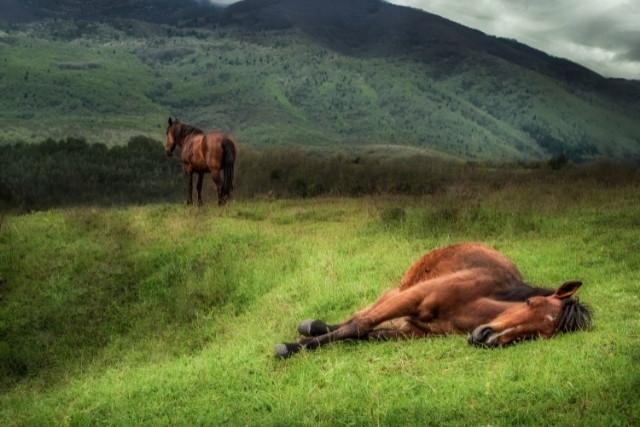 combien-de-temps-vit-un-cheval