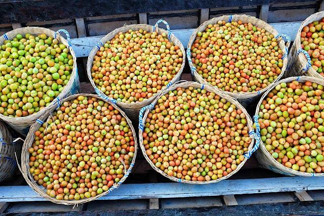 """Cây trồng phổ biến nhất của người Inthar là cây cà chua, cà chua được trồng trên hồ Inle là một đặc sản của nơi này. Người dân Myanmar thường truyền miệng câu """"đến Inle mà chưa ăn salad cà chua ở đây coi như chưa từng đến Inle"""". Khi con gái đến tuổi lấy chồng, cha mẹ thường cắt cho một vài bè nổi để con gái làm của hồi môn, sống ở đâu thì đẩy bè đến đó mà canh tác trồng trọt, sinh nhai. Ngoài trồng trọt, người Inthar còn sống vào nguồn thủy sản đánh bắt được trong hồ."""