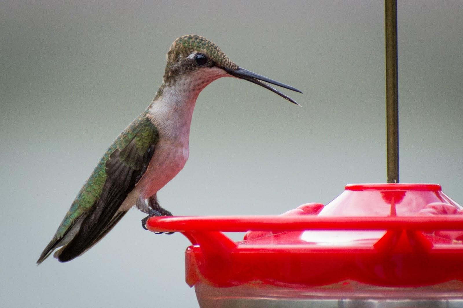 garden perky window feeders bird patio amazon birdscapes birds unlimited pet ca clear feeder dp wild lawn