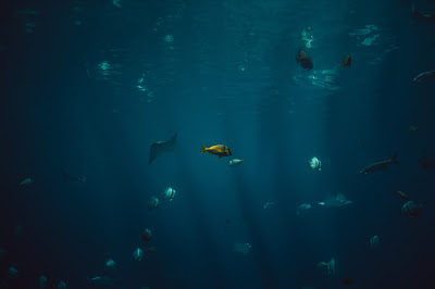 https://unsplash.com/search/fishes?photo=58v6htwORBk