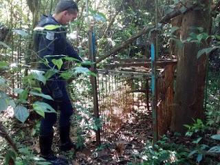 Guarda Civil de São Carlos encontra armadilha deixada por caçadores na Floresta Estadual