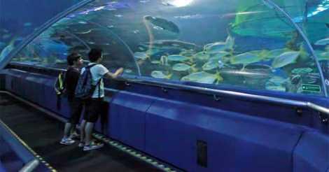 Pemandangan Bawah Laut di Aquaria KLCC