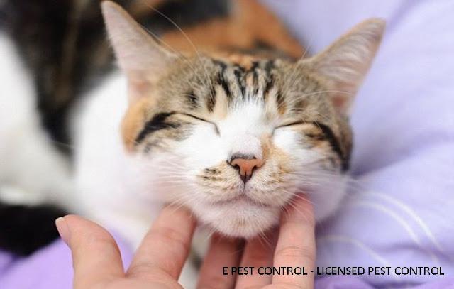 4 info mudah kutu kucing