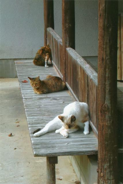 Three cats at Hagi Castle, Yamaguchi