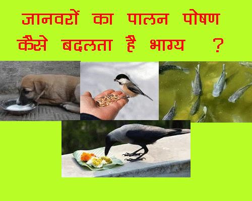 Janwaro Ko Khilane se Kaise Badalta Hai Bhagya