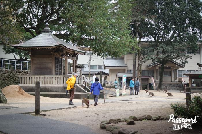 Singes en liberté, parc Takasakiyama, Oita