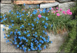 Un giardino di perenni in ticino blu paradisiaco for Perenni da giardino
