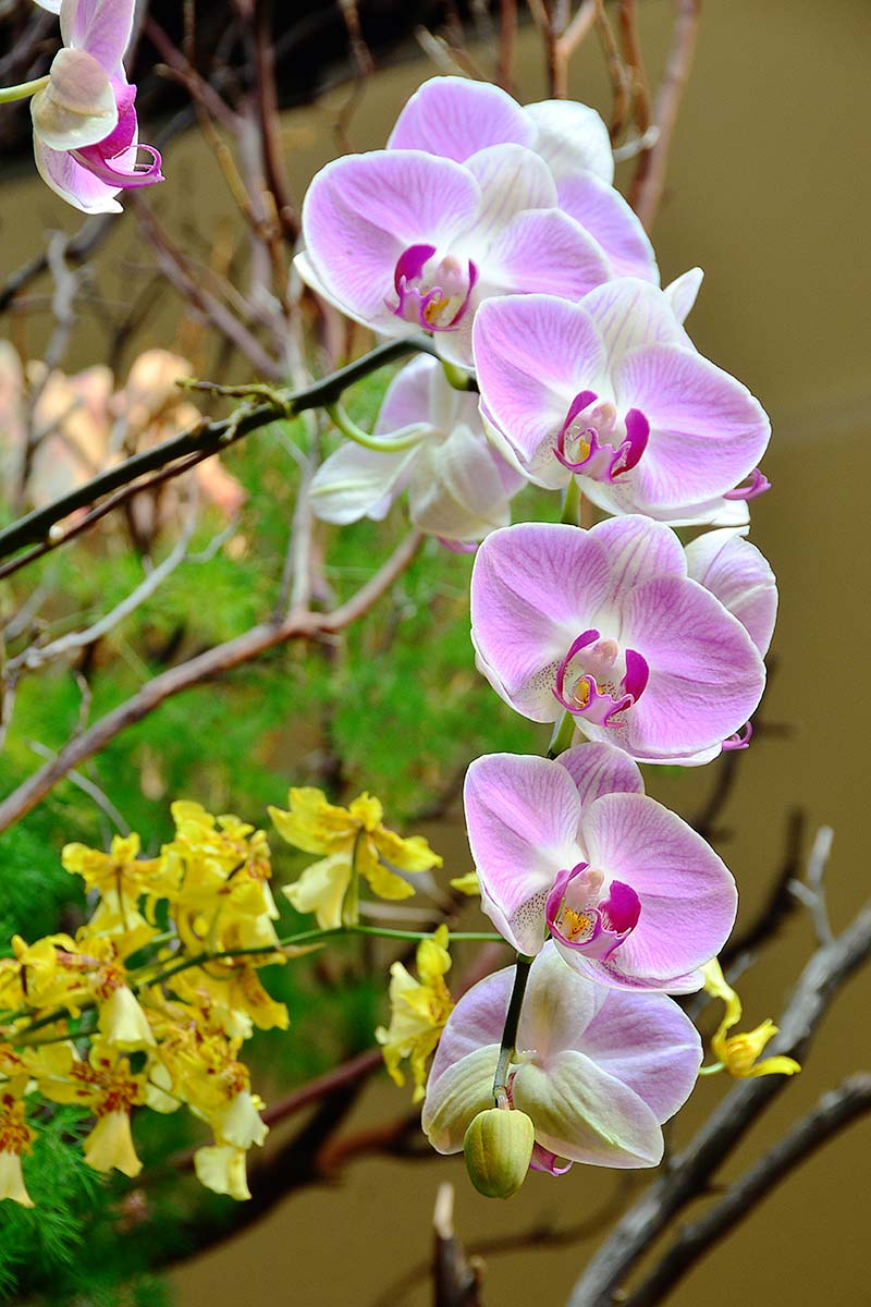 Orchids 07 by Jeanne Selep
