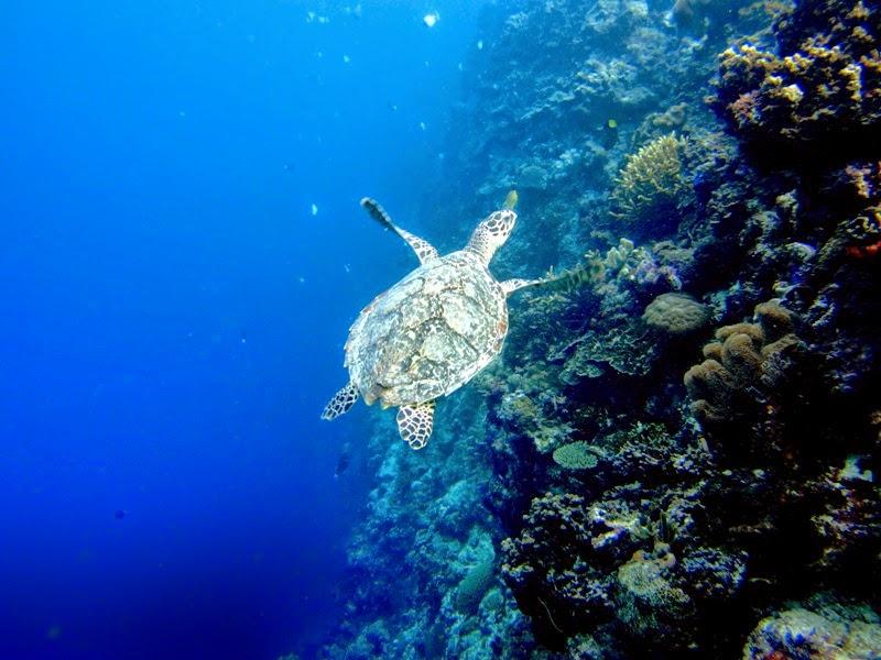 Coral Tanjung Bira, Bugis Makassar Trip