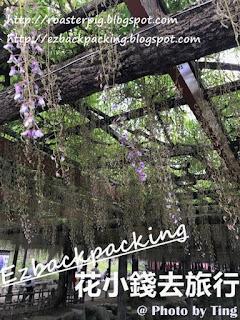 天王川公園紫藤