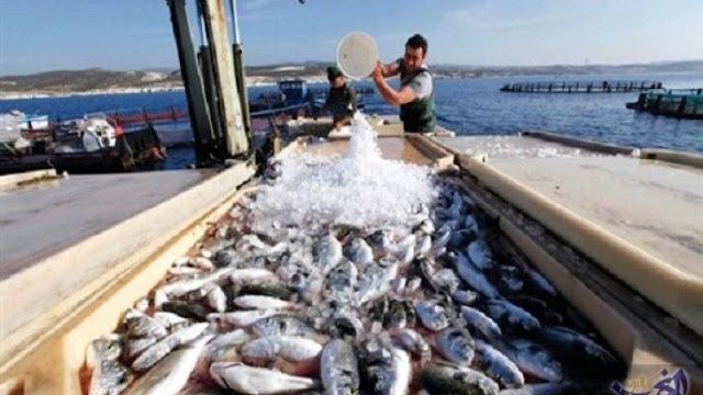المهدية : الثروة السمكية والنباتية أصبحت مهدّدة ..!