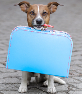 Boarding Your Pup: 5 Tips For Packing a Doggy Bag