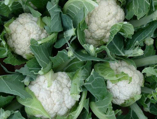 cauliflower mein pryog khad,